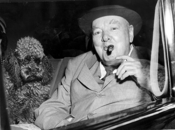 winston-churchill-poodle