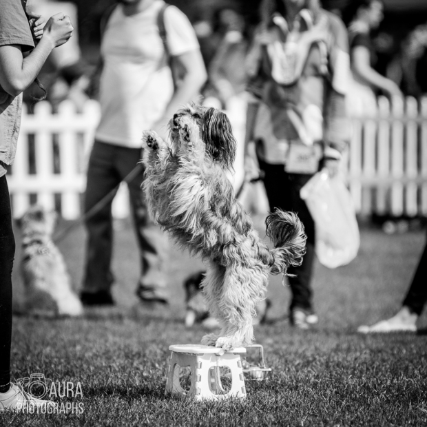 pupaid Tilly-27