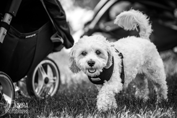 pupaid Tilly-31