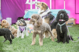 pupaid Tilly-53