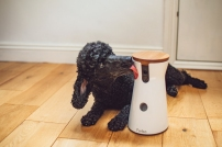 sillytillypoodle_BLOGimagery-4