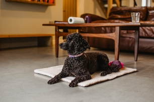 tilly_homefromhome-3
