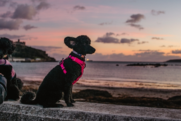 tilly_marazion-2
