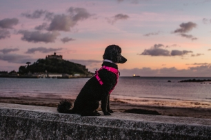 tilly_marazion-3