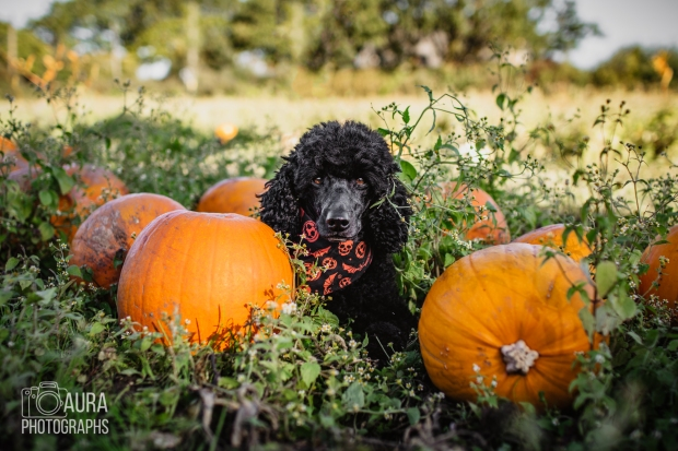 Tilly_DevilDood_Pumpkins2018-10