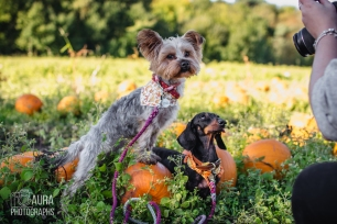 Tilly_DevilDood_Pumpkins2018-14
