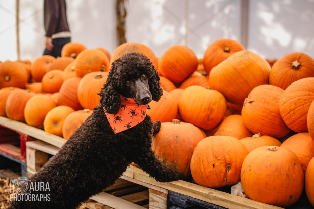 Tilly_DevilDood_Pumpkins2018-17