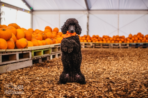 Tilly_DevilDood_Pumpkins2018-25