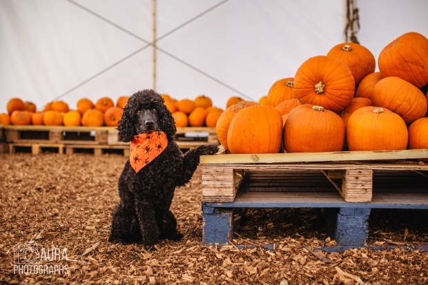 Tilly_DevilDood_Pumpkins2018-27