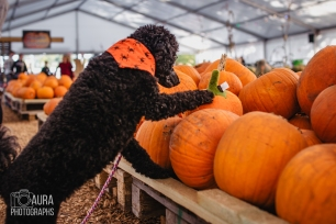 Tilly_DevilDood_Pumpkins2018-34
