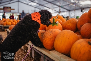 Tilly_DevilDood_Pumpkins2018-36