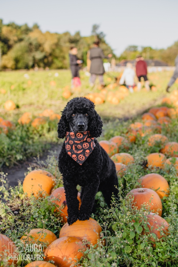Tilly_DevilDood_Pumpkins2018-5