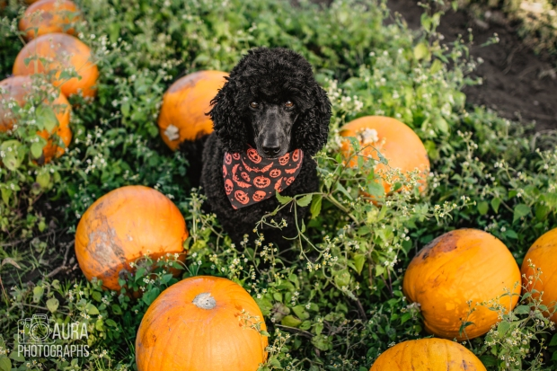 Tilly_DevilDood_Pumpkins2018-9