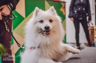 dogsofiglondon_auraphotographs-12