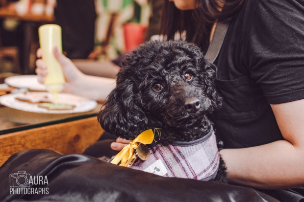 dogsofiglondon_auraphotographs-13