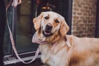 dogsofiglondon_auraphotographs-15