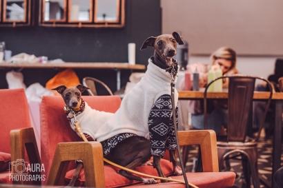 dogsofiglondon_auraphotographs-25