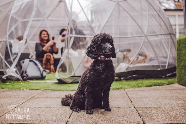 dogsofiglondon_auraphotographs-3