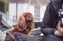 dogsofiglondon_auraphotographs-4