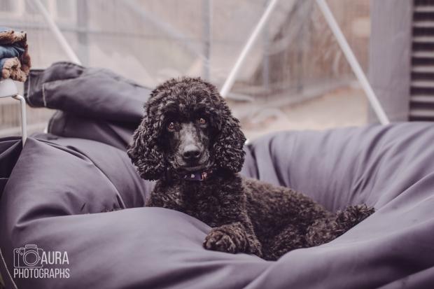 dogsofiglondon_auraphotographs-5