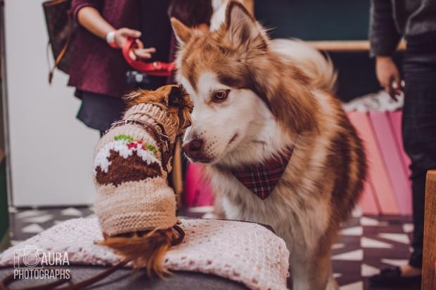 dogsofiglondon_auraphotographs-8