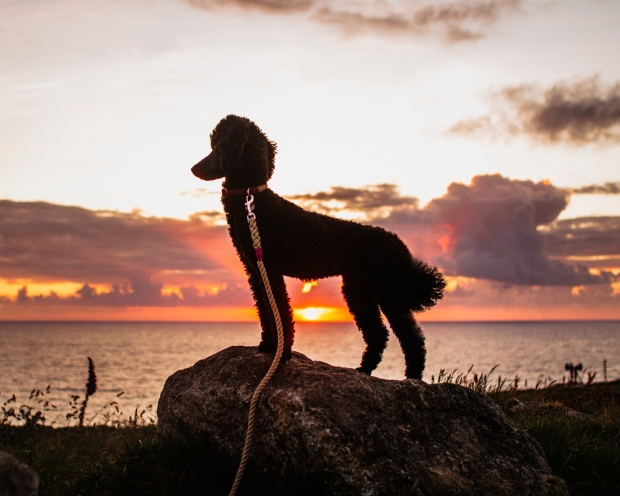 tilly_sunset_pendeen